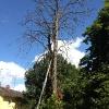 Toter_Baum